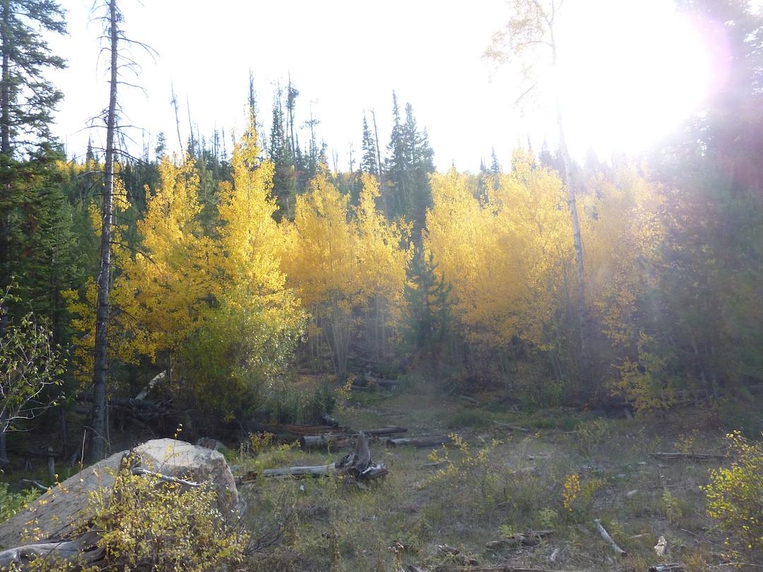 Brush Creek Trees